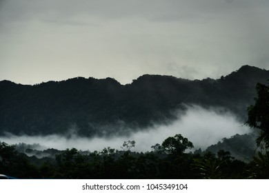 Wet and foggy jungle of Malaysia