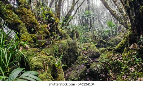 Wet forest with green moss, Mahe island, Seychelles