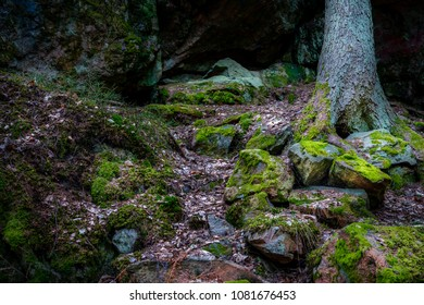 Wet forest with rocks and stones covered with green moss, pine tree in the background.