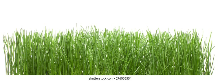 Wet green grass isolated on white background