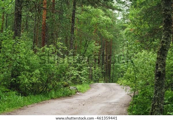 wet green summer forest of karelia