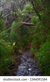 Wet hiking trail in a tropical forest. Portuguese island of Madeira