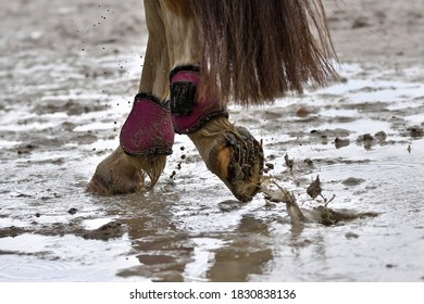Wet horse hooves in the mud, close-up. Dirty horseboots. Horse foot in motion in a pool.