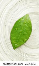 wet leaf macro - zen concept