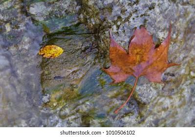 Wet Leaf on Rock