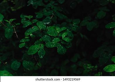 wet leaf's beautiful shot Vernon BC