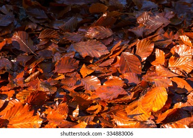 Wet Leaves in Autumn on the Ground / Wet leaves, brown, orange and red, in autumn on the ground in the undergrowth