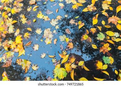Wet leaves on ground - autumn theme