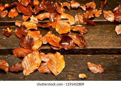 wet leaves on wooden planks in the autumn in the park