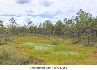 Wet moor or bog landscape at bright summer day