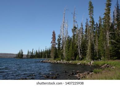 Wet Oregon Landscapes and Streams