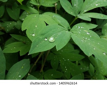 wet plant with green leaves and water drops