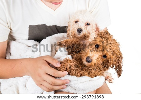 Wet Poodle Puppies Wrapped Towel After Stock Photo Edit Now