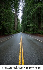 Wet Road Cuts Through Redwood Forest in Yosemite valley