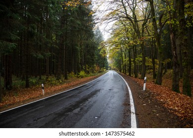 Wet road leads through a colorful deciduous forest, in the Harz mountains