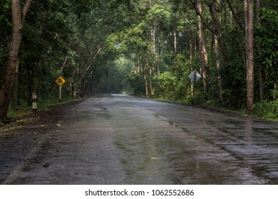 wet road And rain in the forest.