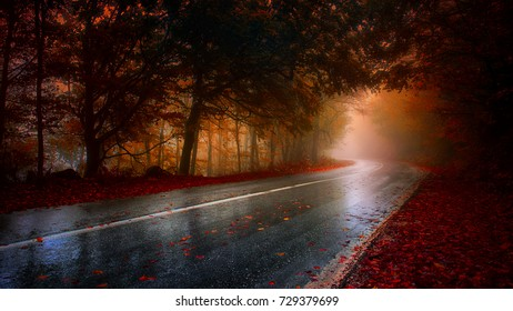 wet road winding through a red forest on a rainy and misty autumn day