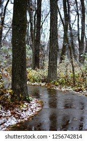 A wet and slick paved trail running through a Missouri forest during a light snow.