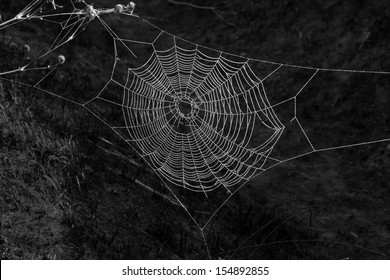 wet spiderweb on a black background