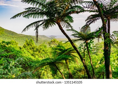 Wet Tropics landscape behind the palms. View shot in Daintree Rainforest, Cairns, Queensland, Australia. Postcard from jungle.