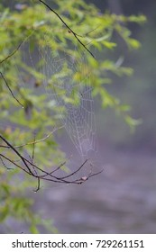 Wet web over the mountain river in the fog