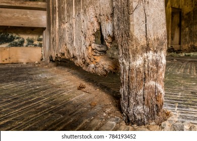 Wet wood rot decay on timber in old stable block