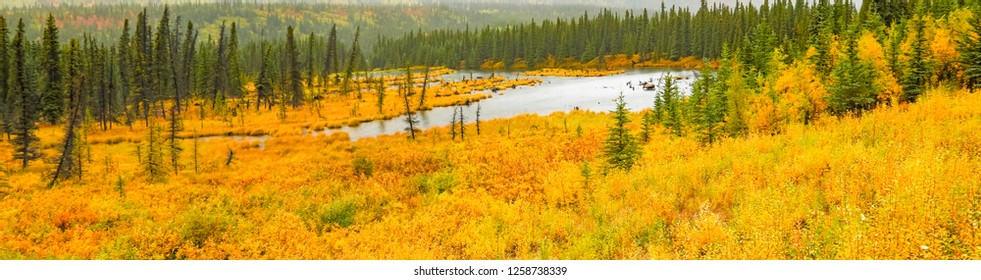 A wetland and autumn colored brush on the tundra near Denali National Park, Alaska.  A moose is browsing plants in the water.