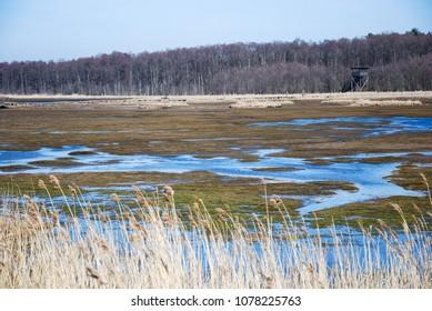 Wetland at Beijershamn on the Swedish island Oland - a famous bird watching site