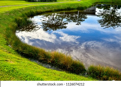 wetland calm water