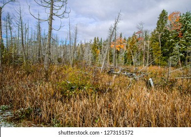 Wetland Conservation. Panoramic scenic landscape of preserved wetlands in the Upper Peninsula of northern Michigan at Tahquamenon Falls State Park.