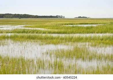 Wetland Conservation at the Virginia National Seashore