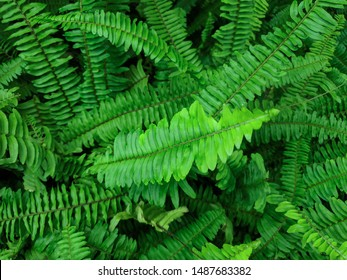 Wetland filled with fern leaves, Beautiful ferns leaves green foliage nature. Floral fern background. Ferns leaves green foliage. Tropical leaf. Exotic forest plant. Botany concept. Ferns jungles.