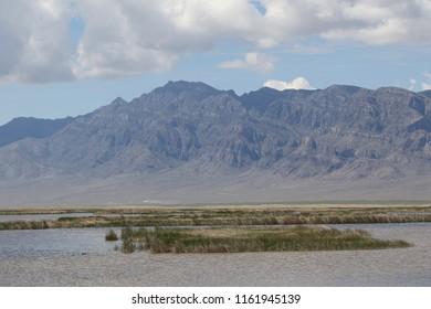 Wetland at Fish Springs National Wildlife Refuge, Utah