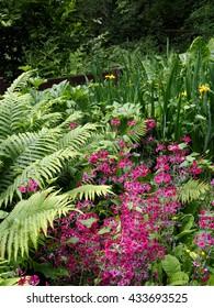 wetland garden in spring