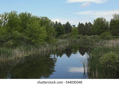 Wetland in Grand Forks, North Dakota