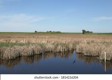 Wetland near Grand Forks, North Dakota