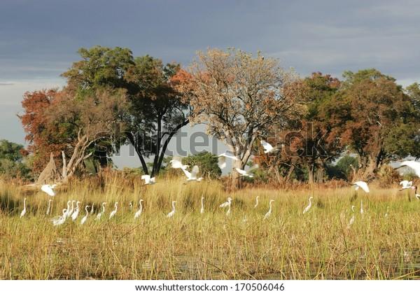 Wetland, Okavango