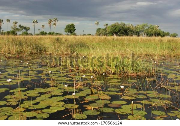 Wetland, Okavango, Africa
