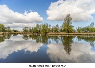 Wetland in Oostvaardersplassen, the Netherlands, blue sky with white clouds and nice reflection in water