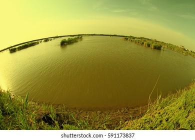 Wetland park scenery