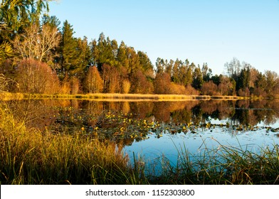 wetland, river, valdivia, south