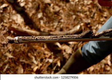 Wetland Soil Core Sample