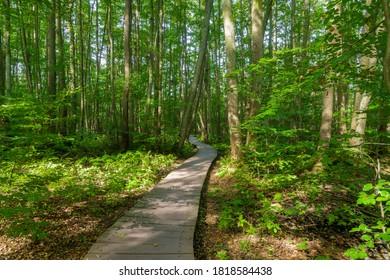 wetland swamp lake reflecting trees Briesetal Birkenwerder