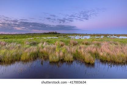 Wetland teeming with bird life in natura 2000 area Zuidlaardermeergebied nature reserve