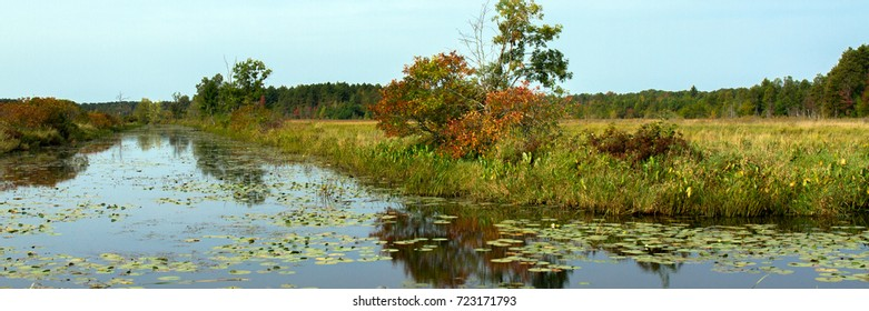 Wetland with water lilies in Necedah National Wildlife Refuge in Wisconsin