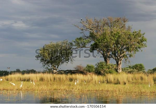 Wetland-Okavango