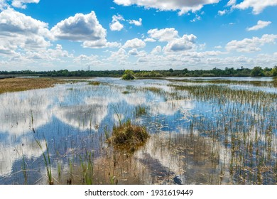 Wetlands area at Chapel Trail Nature Preserve, with sky reflected in water - Pembroke Pines, Florida, USA