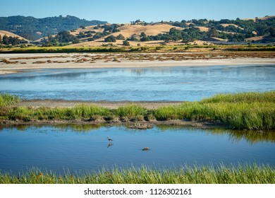 Wetlands bird refuge and walking park, protected land, wildlife area, Petaluma, California