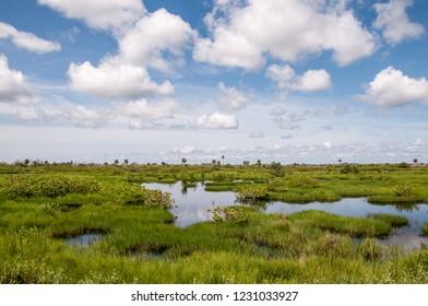 Wetlands at Canaveral National Seashore in Florida.