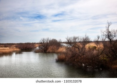 Wetlands of emporda natural park. Girona. Spain